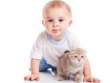 Le chat et l'arrivée de bébé à la maison