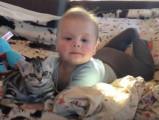 Un chat American Shorthair est collé à un bébé