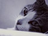 La dépression chez le chat