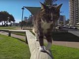 Digda, un chat ninja qui va vous étonner