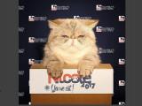 Nicole, premier chat candidat à l'élection présidentielle