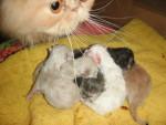 Chat canel est c\'est bébé -   (0 mois)