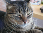 Chat Gimzo -   (0 mois)