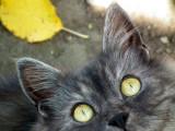 Autour du chat