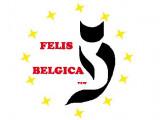 Felis Belgica