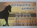 Ostéopathe animalier