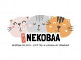 Chatterie Nekobaa