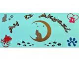 Ay d'Akyazi