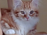Chatterie D'Ozma / Ozma Cattery