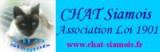 Club du chat Siamois