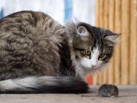 Usages du chat