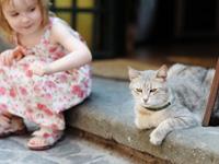 Le chat et les enfants