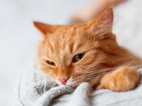 Psychologie du chat. Communiquer & interagir avec son chat