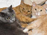 La cohabitation du chat avec ses congénères et avec d'autres animaux