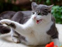 L'agressivité chez le chat