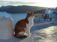 Législation & Formalités relatives pour voyager avec son chat