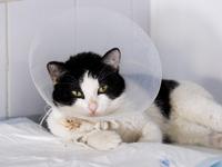 Les maladies du chat et leurs symptômes
