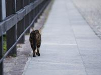 Euthanasie & Décès du chat