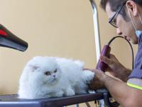 Professionnels & Associations en lien avec les chats