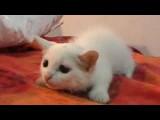 Nouveau : une rubrique Vidéos de chats !