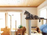 Chat en appartement : optimiser l'espace pour lui offrir un réel terrain de jeu