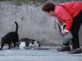 La municipalité de Madrid veille sur les chats des rues