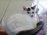Dim Dim, un nouvel accessoire pour chat qui pourrait faire des envieux