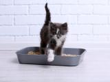 Le bac à litière pour chat