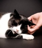 Royaume-Uni : Le Welwyn Garden, un hôtel de luxe pour chat