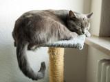 L'arbre à chat, un incontournable pour éviter les griffures sur les meubles