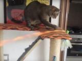 Do It Yourself (DIY) : Canne à pêche pour chat