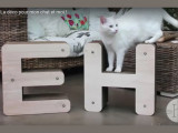 «Homycat», des accessoires design pour votre chat