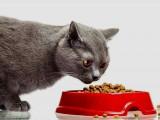Comment choisir, placer et utiliser la gamelle du chat?