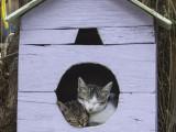 Dôme pour chat