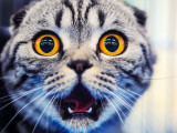 Répulsif pour chat