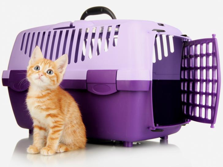 cage de transport pour chat. Black Bedroom Furniture Sets. Home Design Ideas