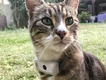 capteur collier chat