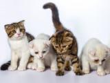 Comment choisir un chat