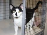 Adopter un chat adulte dans un refuge