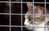 Noël des animaux : seulement deux cents chiens et chats adoptés