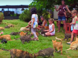 Sous le soleil d'Hawaï, un refuge pas comme les autres