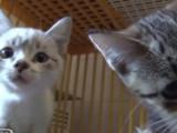 Les conseils pour adopter un chat dans un refuge