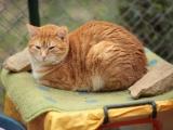 Dix raisons pour adopter un chat de refuge