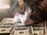 Les 10 races de chats les plus chères du monde
