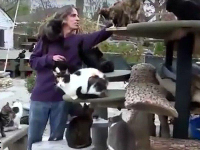 Happy Cat Sanctuary Long Island