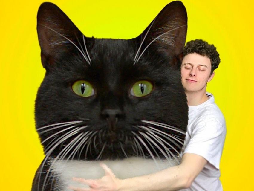 norman sa vie avec son nouveau chat merlin. Black Bedroom Furniture Sets. Home Design Ideas