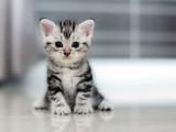 Arrivée d'un chaton à la maison : préparer son environnement