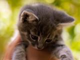 Etes-vous prêt(e) à adopter un chat ?  Les questions à se poser avant l'adoption