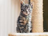 L'Arrivée du Chat : Les Petits Plus