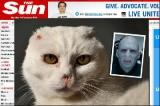 GRANDE-BRETAGNE - Voldemort cat, le chat dont personne ne veut